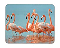 Flamingos are walking in the river Mouse Pad mouse mouse pad Mouse Pad Pad Office Mouse Pad Gaming Mouse Pad Mat Mouse Pad mousepad Dimension: 9.5' x 7.9' [並行輸入品]