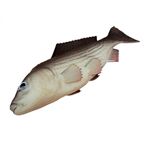 Simulation Ainimal Imitation Cuisine Artificielle Poisson Modèle Décoration Maison Pêche (7 Espèces) - Carpe