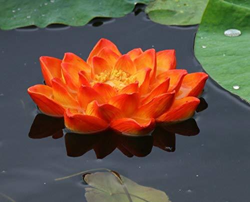 HomDSim Tuin Zwembad landschapsarchitectuur simulatie kikker Aquarium decoratie ornamenten drijvend water dierlijke hars sculptuur lotus