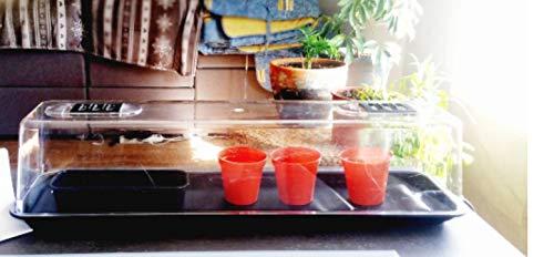 Bricoloco Propagador de esquejes eléctrico Grande 67 cms. Kit de Cultivo Incluido Propagador de Semillas para Efecto Invernadero de Las Plantas Cultivo de Hierbas de Cocina