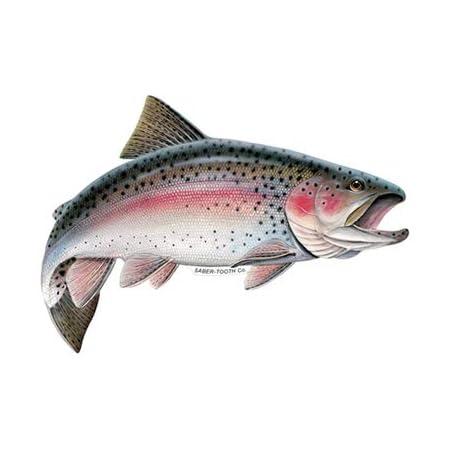 EMC Graphics Rainbow Trout Fish Vinyl Waterproof Sticker Decal Car Laptop Wall Window Bumper Sticker 5