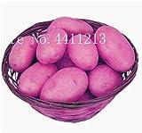 Semillas de Patatas Vegetales Genéricas Frescas de 100 Piezas para plantar Rosa