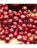 Bulbo de cebolla para plantar variedad 'red carmen' 500gr - Wam