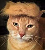 FMJI Trump Style Cat Wig Pet Costume, Donald Dog Head Wear Apparel Toy for Halloween, Christmas, Parties, Festivals