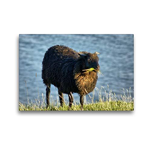CALVENDO Premium Textil-Leinwand 45 x 30 cm Quer-Format Schwarzes Schaf auf Helgoland, Leinwanddruck von Kattobello