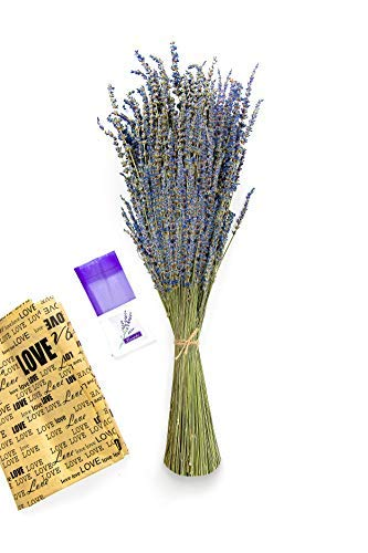 Gutebote Real Dried Lavender Bundles - (1 Bundle) 100% Fresh Harvested Whole Natural Lavendar Bunch with Sachets for Home Decor Decoration Arrangements and More, 18'-23' Long Stems Sprigs (1)
