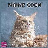 Maine Coon 2022 Calendar 16 Month: Official Maine Coon Cats 2022 Calendar 16 Months