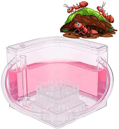 WSVULLD Hormiga acrílica, anidada para Mascotas, Villa de Insectos, Regalo de cumpleaños, Regalo de hábitat Educativo y Aprendizaje de la Naturaleza, Regalo, Rosa (Color : Pink, Size : -)