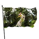 AQQA Banderas de Discos voladores para atrapar Perros, decoración de Fiestas, impresión de Banderas de 3x5 pies, Colores Vibrantes, Calidad Poliéster y Ojales de latón