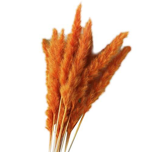 """fllyingu 15 Stück Getrocknete Pampa Gras Schilf Grasfahne Natürliche Künstliche Pampa Gras Getrocknete Blume Phragmiten Communis Für Hochzeitsfotografie Arrangement Home Decor 24""""groß"""