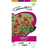 bolsa de semillas Amapola Roja Gondian