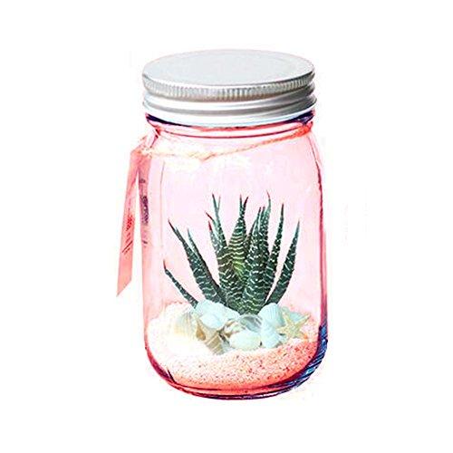 Indoor Gardening Fine Ornamente Sukkulenten ökologische Vase Urlaub Geschenke , Glas , red