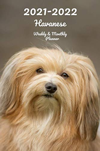 2021-2022 Havanese Weekly & Monthly Planner: 2-Year Pocket Calendar | 26 Months | 152 pages 6x9 in. | Diary | Organizer | Agenda | Appointment | For Dog Lovers