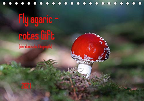 Fly agaric - rotes Gift (Tischkalender 2021 DIN A5 quer)