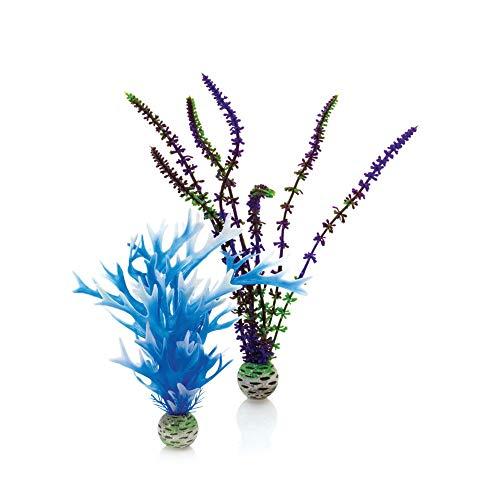 Oase 46059 Pflanzen Set, mittel, blau/lila | Aquaristik | Aquarium | Aquariumbepflanzung | Dekoration