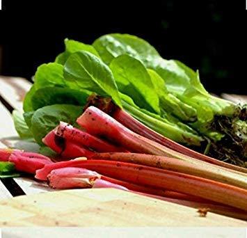 SANHOC Semi Pacchetto: 50+ Victoria Rabarbaro semi-GMO non-Open-impollinate Organic