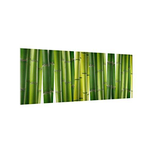 Bilderwelten Panel antisalpicaduras de Cristal - Bamboo Plants - Panorámico, Panel antisalpicaduras Panel de Vidrio para Cocina Panel Protector contra Salpicaduras, Tamaño: 50cm x 125cm