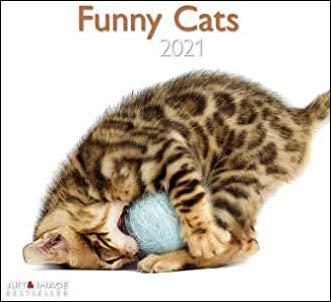 Funny Cats - Broschurkalender - Kalender 2021 - teNeues-Verlag - Art & Image - Wandkalender mit Platz für Eintragungen - 29,8 cm x 29,8 cm (offen 29,8 cm x 59,8 cm)