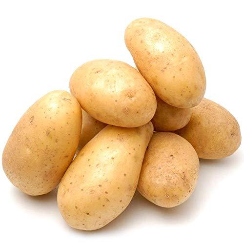 Greatlizard Kartoffelsamen - Pflanzkartoffeln zum Pflanzen, Kartoffelsamen zum Pflanzen Hausgarten 20 PCS/Beutel