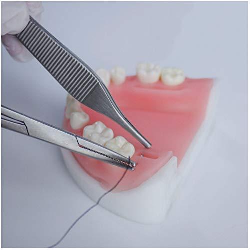 FHUILI Periodontal Modelo Práctica Sutura - Oral sutura Simulatior - Sutura Odontología Kit simulado Dental Oral Modelo de Formación de sutura - para los Instrumentos médicos Formación de Habilidades