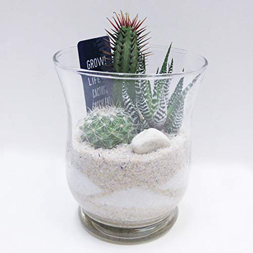 ミニサボテン ガラスポット B(8S57) φ9×h11cm 観葉植物 多肉植物 小さい グリーン サボテン植え込み 鉢 ガラス プランター 簡単 おしゃれ かわいい キレイ サンゴ砂 西海岸風 インテリア アメリカン雑貨