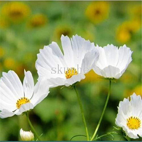 AGROBITS Bonsai printemps semant les tablettes de cosmos pour envoyer des fleurs d'engrais fleurs vert paysage jardin mer 100pcs (bo si ju): 8
