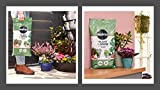 Zoom IMG-2 miracle gro plant grow compost