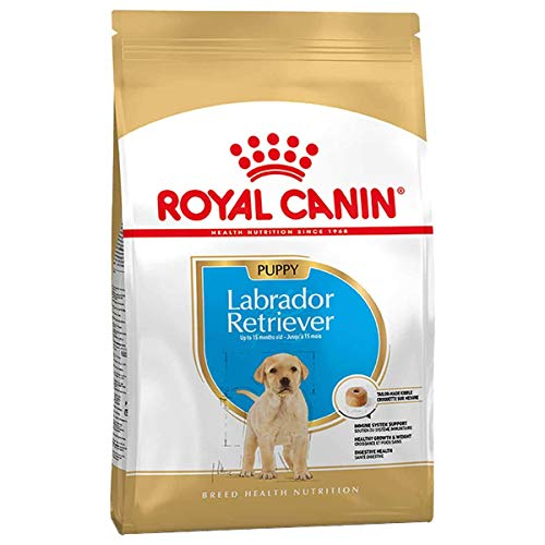 ROYAL CANIN Labrador Retriever Junior 3 kg, 1er Pack (1 x 3 kg)