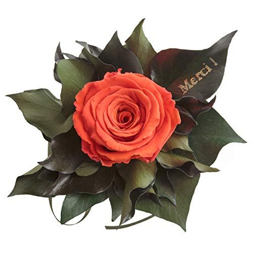 """Ewige Rose konserviert Rosenstrauß mit Goldschrift""""Merci"""" 3 Jahre haltbar Danksagung Gastgeschenk ROSEMARIE SCHULZ® (Orange)"""