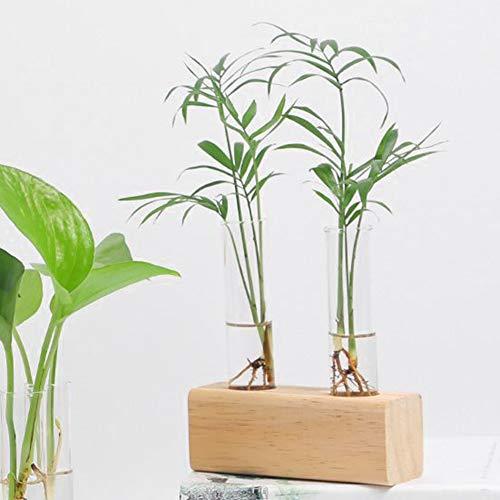 A sixx Vidro de borossilicato alto com rack vaso de plantas hidropônicas, tubo de teste de cristal transparente moderno, para plantas de baixa manutenção, suculentas, arbustos em miniatura