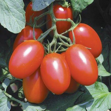 David's Garden Seeds Tomato Plum Juliet 4767 (Red) 25 Non-GMO, Hybrid Seeds