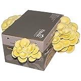 Cultivo de hongos de limón XXL I cultivar hongos I sin conocimientos previos I juego de cultivo para el hogar I hongos de limón frescos