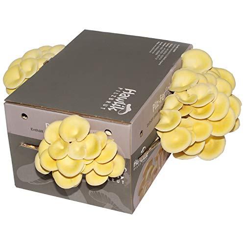Limonenpilzkultur XXL I Pilze züchten I ohne Vorkenntnisse I kinderleichtes Zuchtset für Zuhause I frische Limonen-Pilze