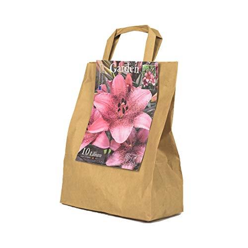 10 echte Lilienzwiebeln in verschiedenen Farben - Blumenzwiebeln in Geschenkverpackung - mehrjährig, gartenpflanzen winterhart Knollen Lilium Lilien - Hohe Qualität (10 Lilien Rosa/Pink)