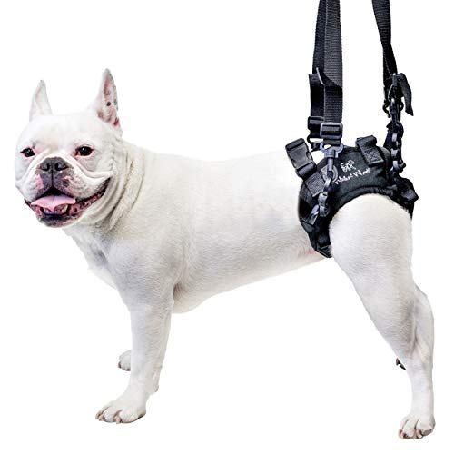 Lift Rear Dog Support Harness | Helps Dogs with Arthritis, Weakness, Joint Injuries Rehab | Adjustable Handles