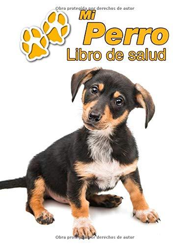 Ajustable Collares Accesorios Gato Cachorro Diferentes Colores /& Tama/ños Mediano y Grande para Perros Peque/ño Verde M DDOXX Collar Perro Nylon