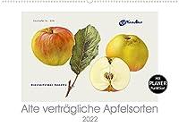Alte vertraegliche Apfelsorten (Wandkalender 2022 DIN A2 quer): Alte Apfelsorten, die auch von Allergikern oft gut vertragen werden. (Geburtstagskalender, 14 Seiten )