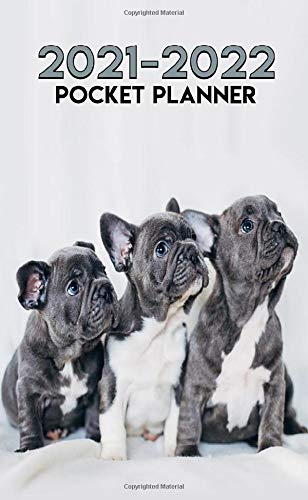 2021-2022 Pocket Planner: Curious Frenchies Two Year (24-Months) Monthly Organizer Calendar Agenda - French Bulldog Puppy