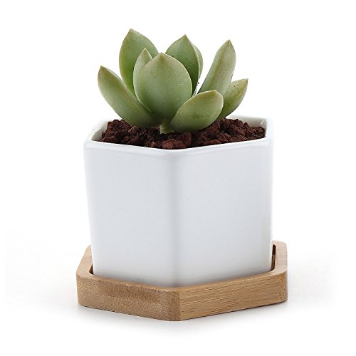 T4U 2.75 Inch White Ceramic Pots Hexagon Succulent Cactus Planter with Free Bamboo Tray for Home Decoration