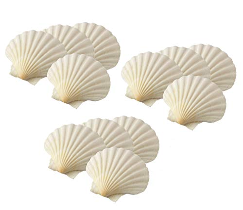 Maine Man Baking Shells, 4 Inch, Set of 12, Natural Seashell