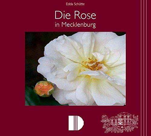 Die Rose in Mecklenburg