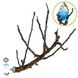 Aufregend VERZWEIGTE Obst Sitzstange für Vögel wie Wellensittich & Nymphensittich