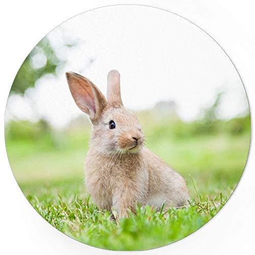 48 Oster-Aufkleber Osterhase Hase Foto auf Wiese - für Geschenke zu Ostern/Sticker/Aufkleber/Etiketten/Rund