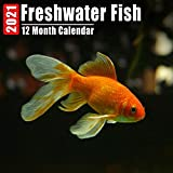 Calendar 2021 Freshwater Fish: Cute Freshwater Fish Photos Monthly Mini Calendar With Inspirational Quotes each Month