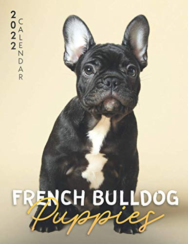French Bulldog Puppies Calendar 2022: Great 18-month Grid Calendar 2022 from July 2021 to December 2022 for all fans!!!