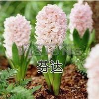 9:土壌栽培水耕ヒヤシンス花植物屋内植物種子3種子