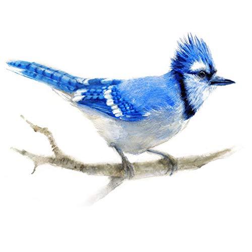 Blue Jay Watercolor Print Bird Virginia Free shipping / New Beach Mall Art