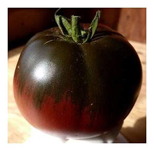 Tomate Black Sea Man - tomate beefsteak noir-rouge - 20 graines