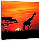 Giraffe im Sonnenuntergang, Format: 60x60 auf Leinwand, XXL