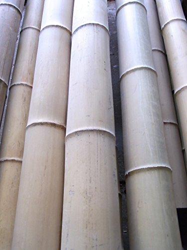 BIHL Bambusrohr Bambusstange Bambus 9-10 x 4 m / 90-100 mm (5)